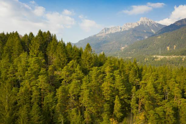 Waldbaum vor Bergsaeulen mit blauem, wolkenverhangenem Himmel bei reutte – Foto