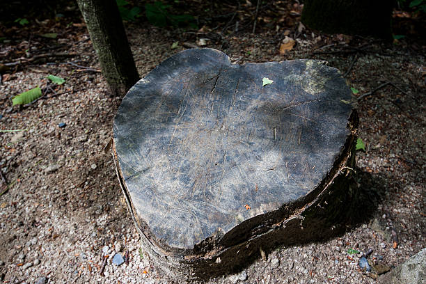 Tree of hearts at Franconia Notch State Park New Hampshire stock photo