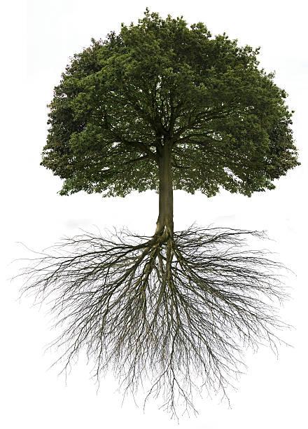 Tree of life picture id157512010?b=1&k=6&m=157512010&s=612x612&w=0&h=noajs4c9b vrquzilsufdcxrpi6znqfetvaab7dskia=