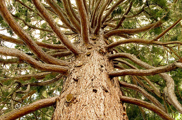 arbre de vie - arbre généalogique photos et images de collection