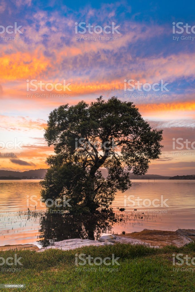 Tree of Life Waterscape stock photo