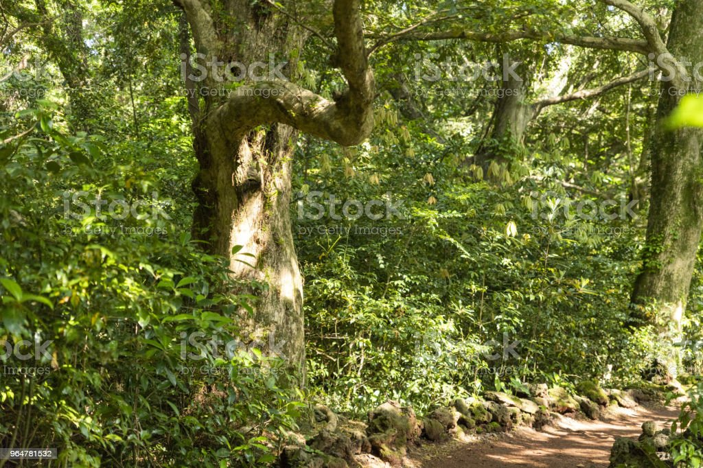 A tree of many years royalty-free stock photo