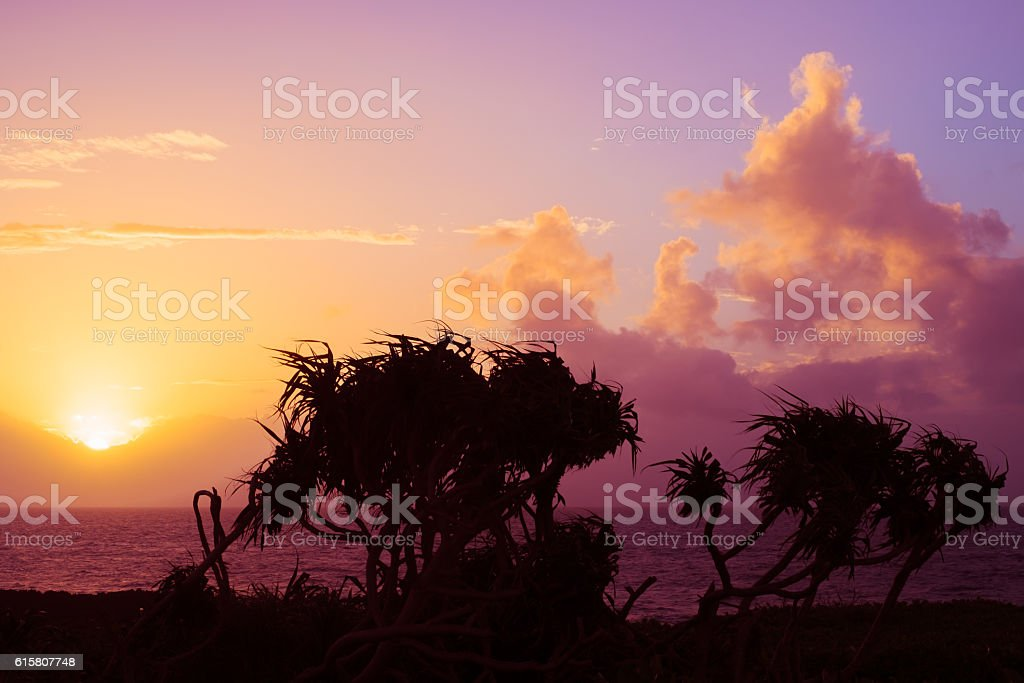 Tree of orange sunset and Adan of Okinawa sea stock photo