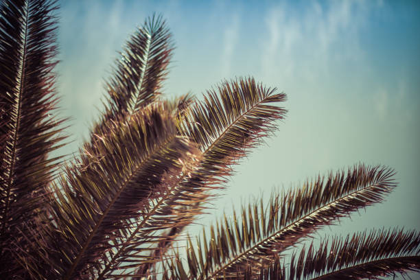 リゾート エリアの木。 ストックフォト