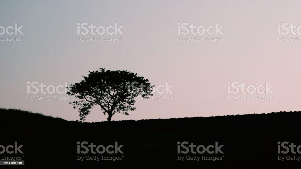 Tree of shadows foto stock royalty-free