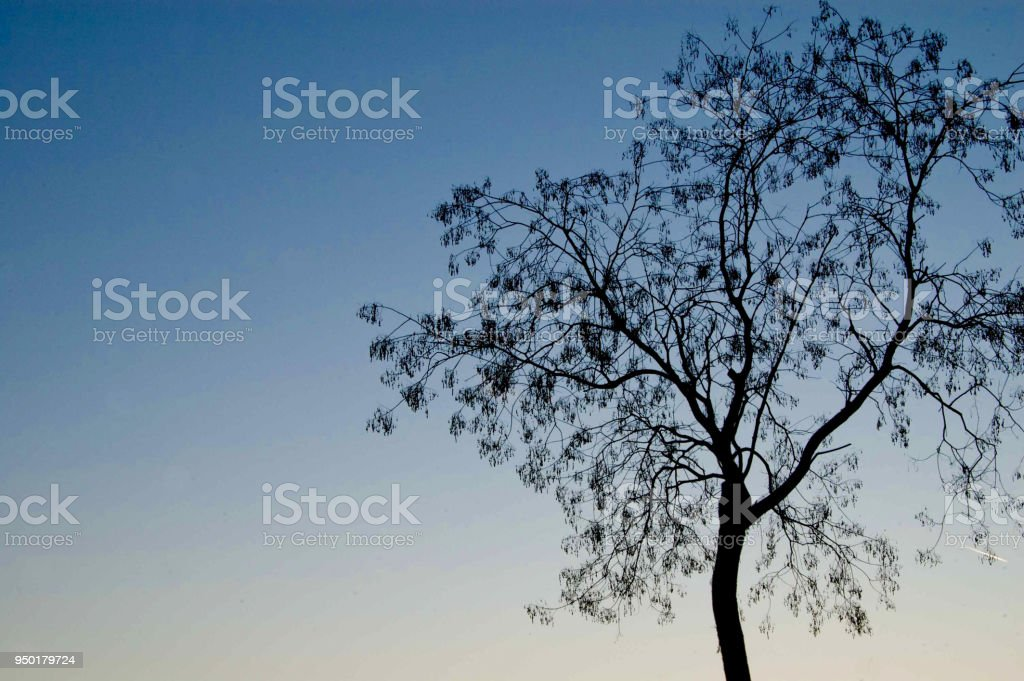 Tree of St.Louis street stock photo