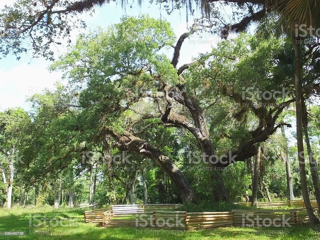 Tree of Tears - Loxahatchee River Battlefield Park, Jupiter, Florida stock photo