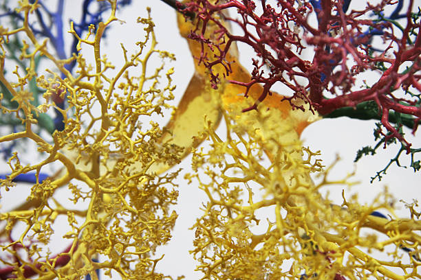 Tree of veins close stock photo