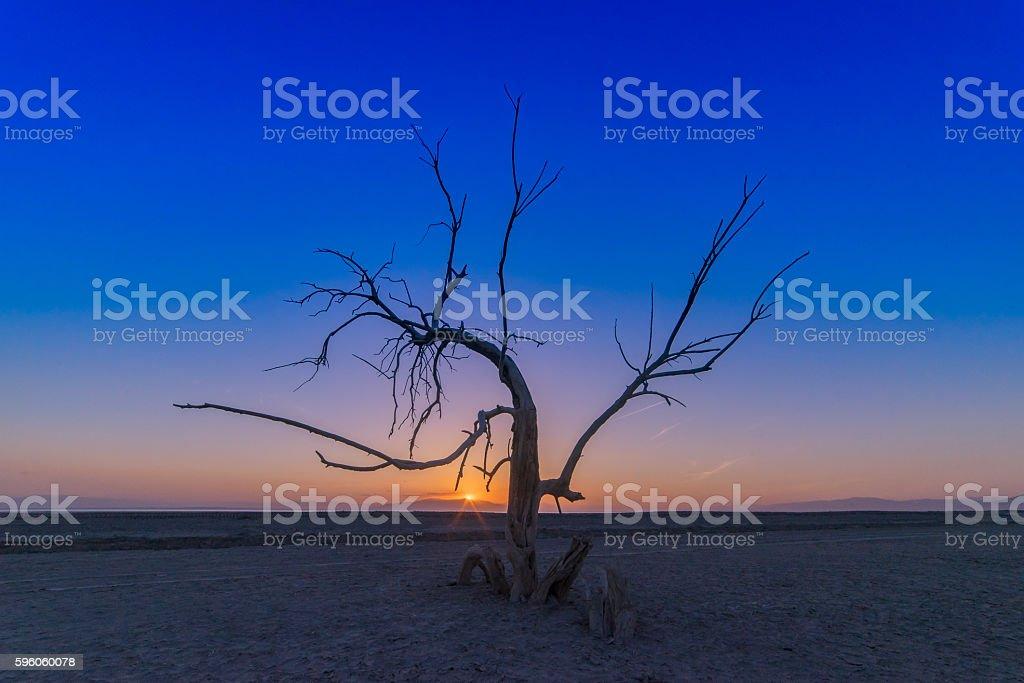 Tree of Wisdom royalty-free stock photo