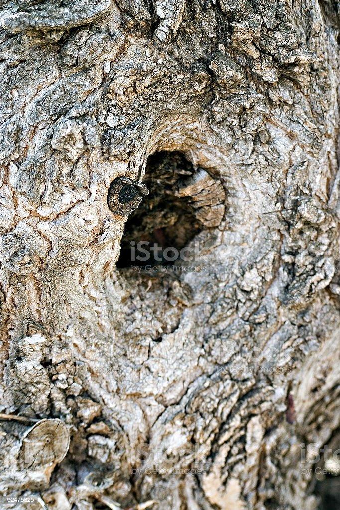 Baum, Oh Lizenzfreies stock-foto