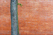 Tree on a background of a brick wall