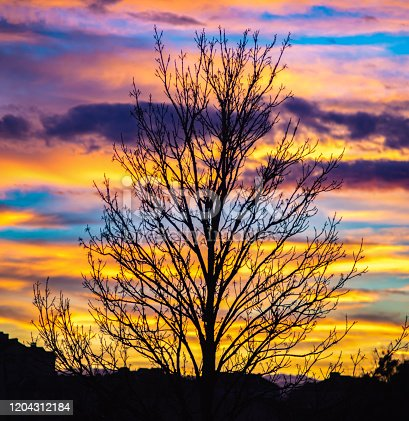 Panorama of a tree on a background of colorful sunset clouds