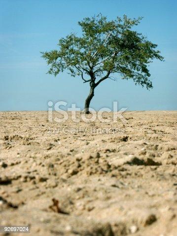 Tree on a Beach<br>