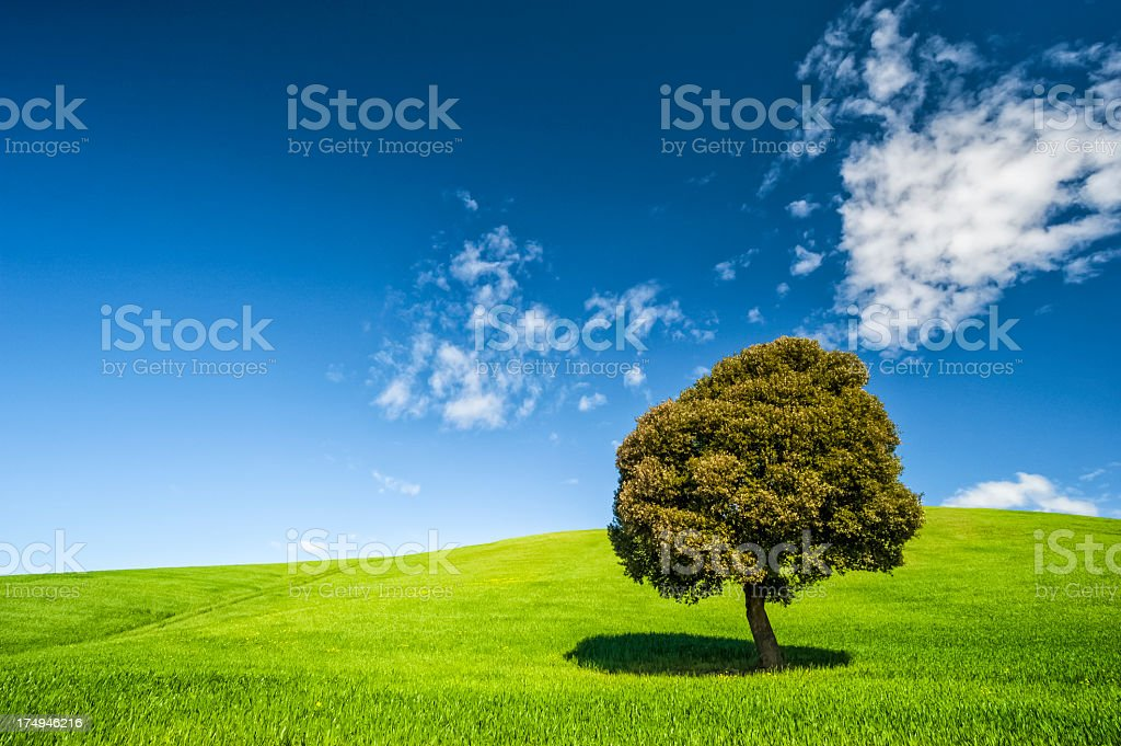 Tree on a green field against blue sky royalty-free stock photo