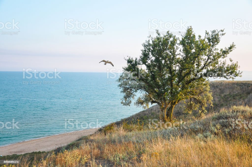 Tree on a hill in front of the sea view, flight of gulls, light sunshine sunshine stock photo