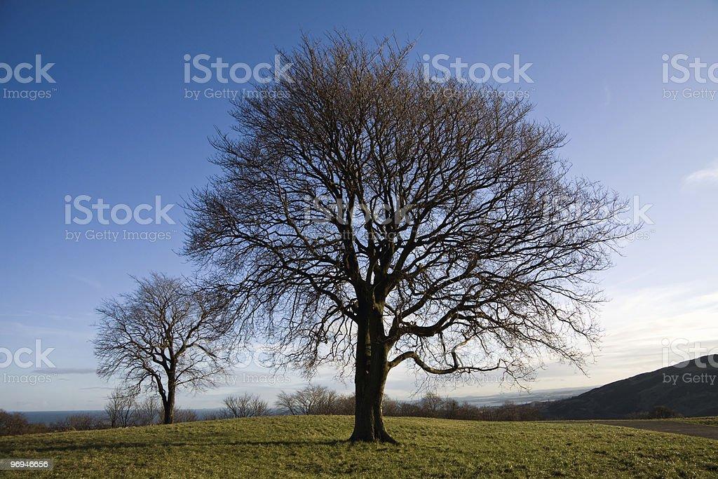 Tree on a hill near Edinburgh royalty-free stock photo