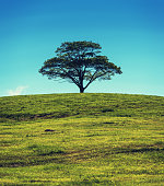 A solitary tree stands high on a hill in rural Nova Scotia under clear afternoon skies.