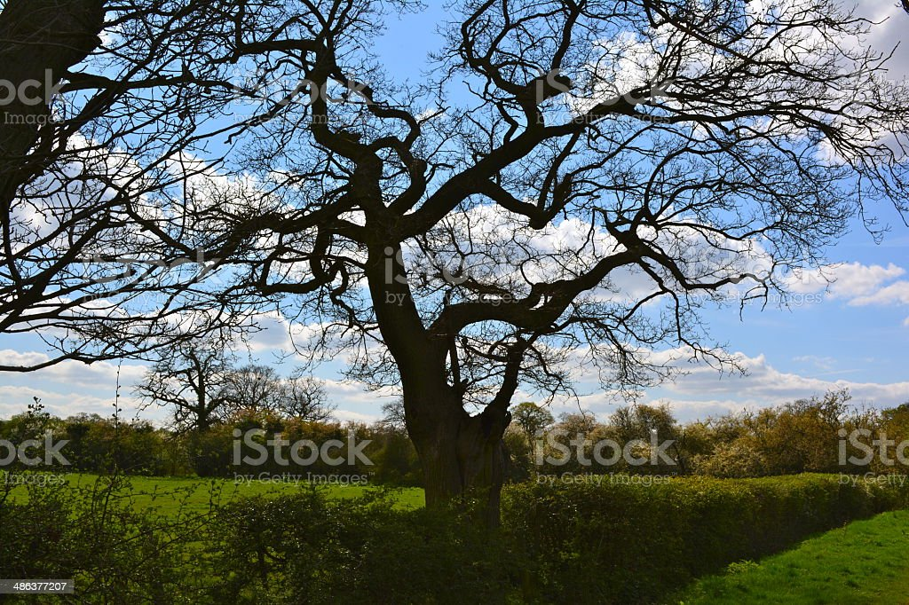 tree on a nice day royalty-free stock photo