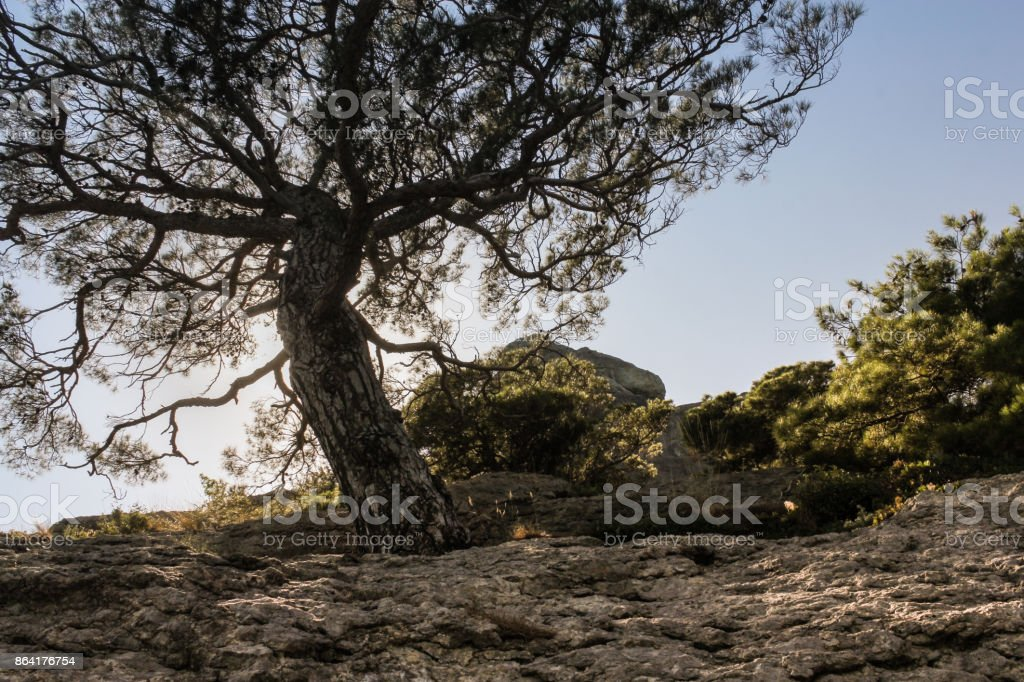 A tree on a rock. royalty-free stock photo