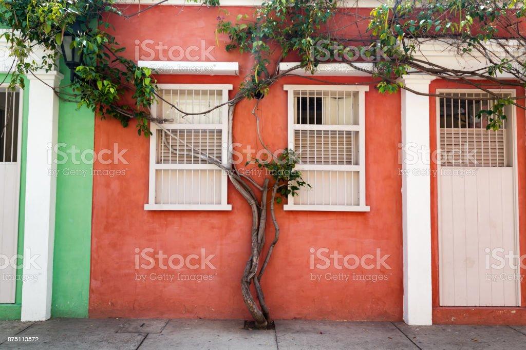 Tree on an Orange Wall stock photo
