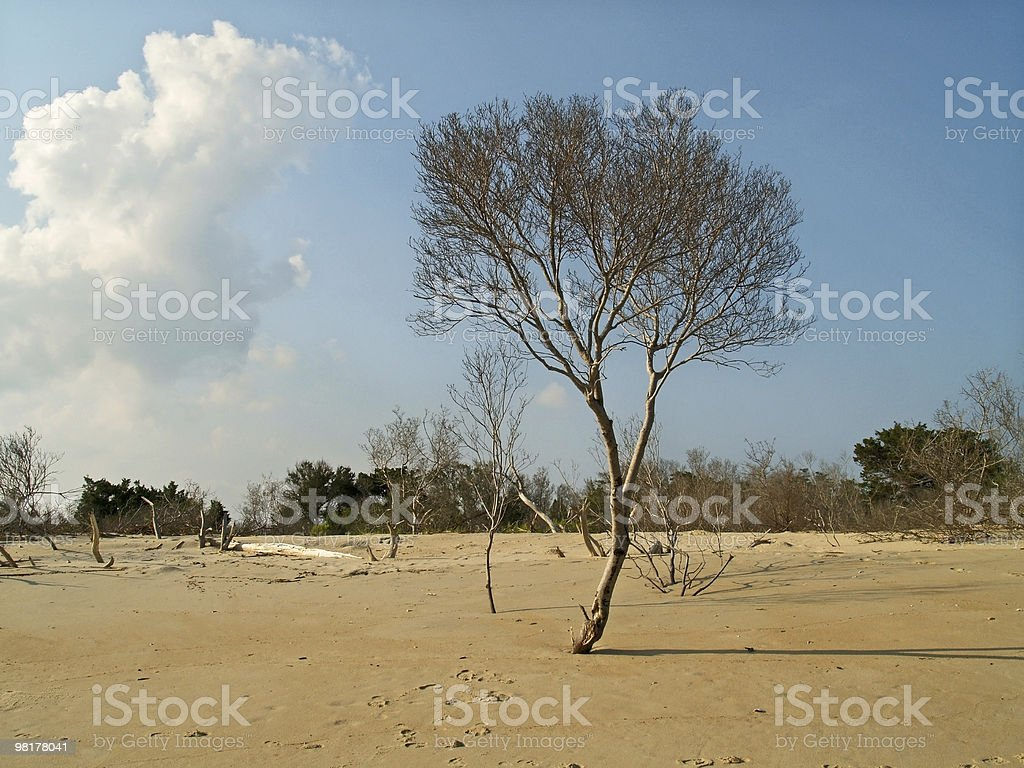 Tree on Beach royalty-free stock photo