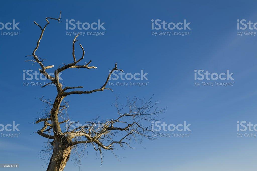 Tree on blue sky royalty-free stock photo