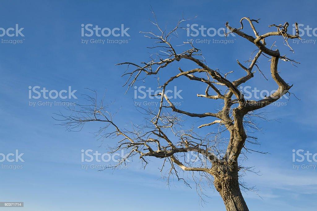 Baum auf blue sky Lizenzfreies stock-foto