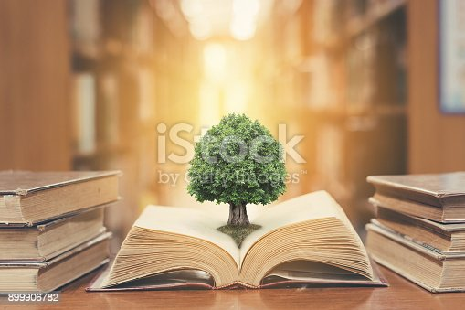 istock Tree on book in library 899906782