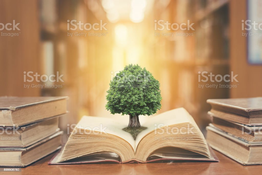 Tree on book in library stock photo