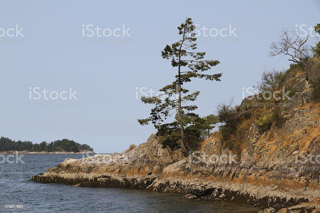 Tree on Bowen Island stock photo