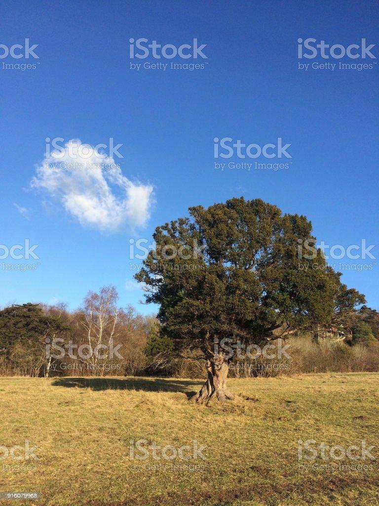 Tree on Box Hill, Surrey England stock photo