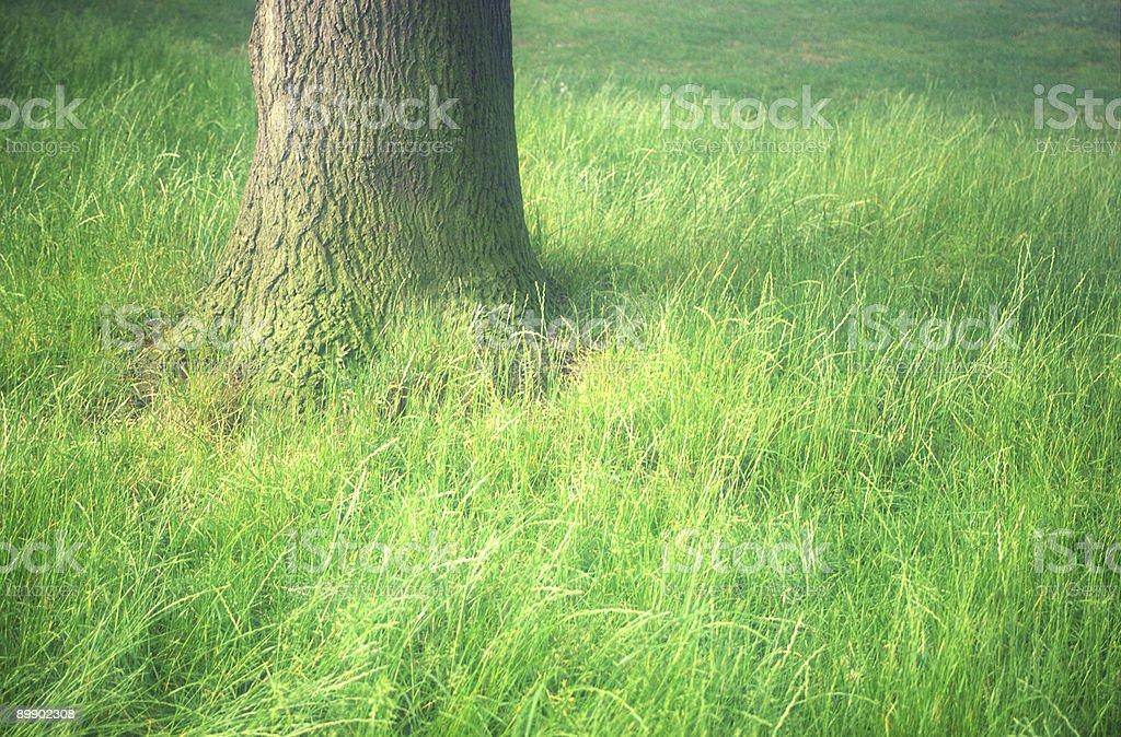 Tree on grass royalty-free stock photo