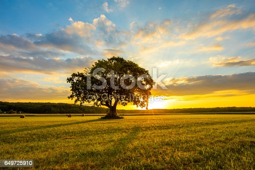 Tree growing on grassy field. Tranquil view of landscape at morning against cloudy sky. Scenic view of nature.