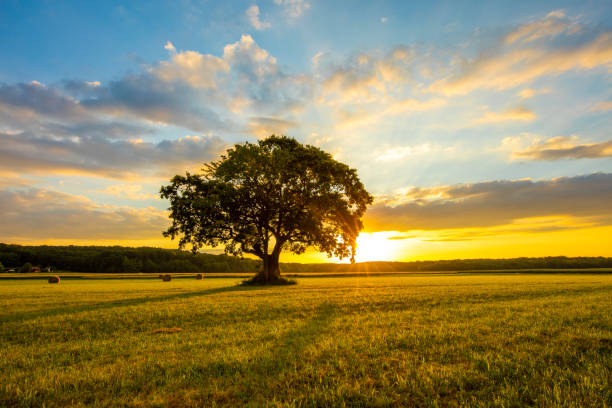 Tree on grassy field against cloudy sky stock photo