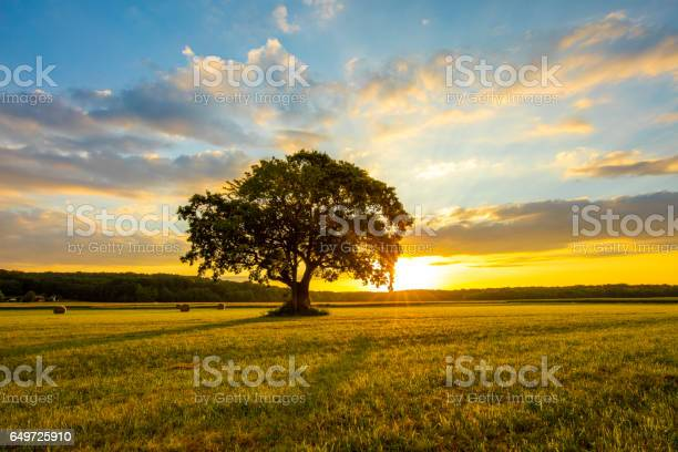 Photo of Tree on grassy field against cloudy sky