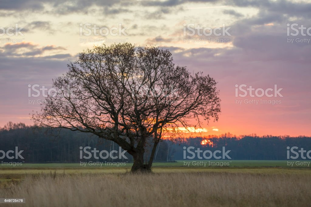 Tree on grassy field against sky during sunset stock photo