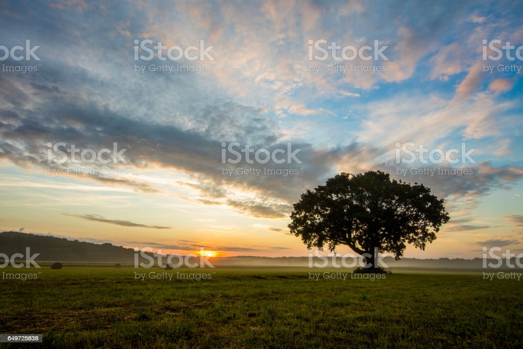 Tree on grassy filed against sky stock photo