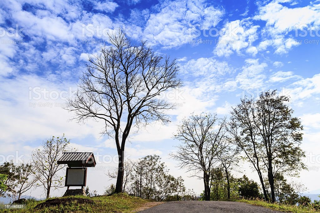 Tree on hill and blue sky royalty-free stock photo