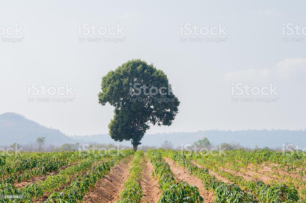 tree on hill stock photo