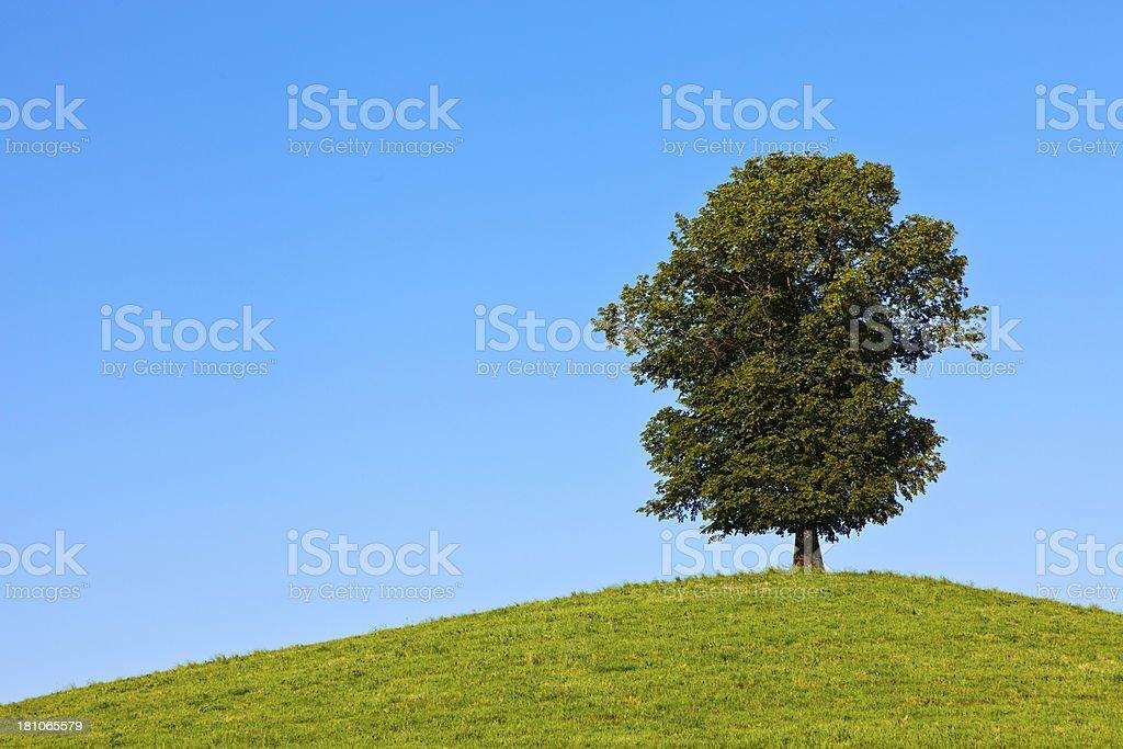Tree on Hilltop stock photo