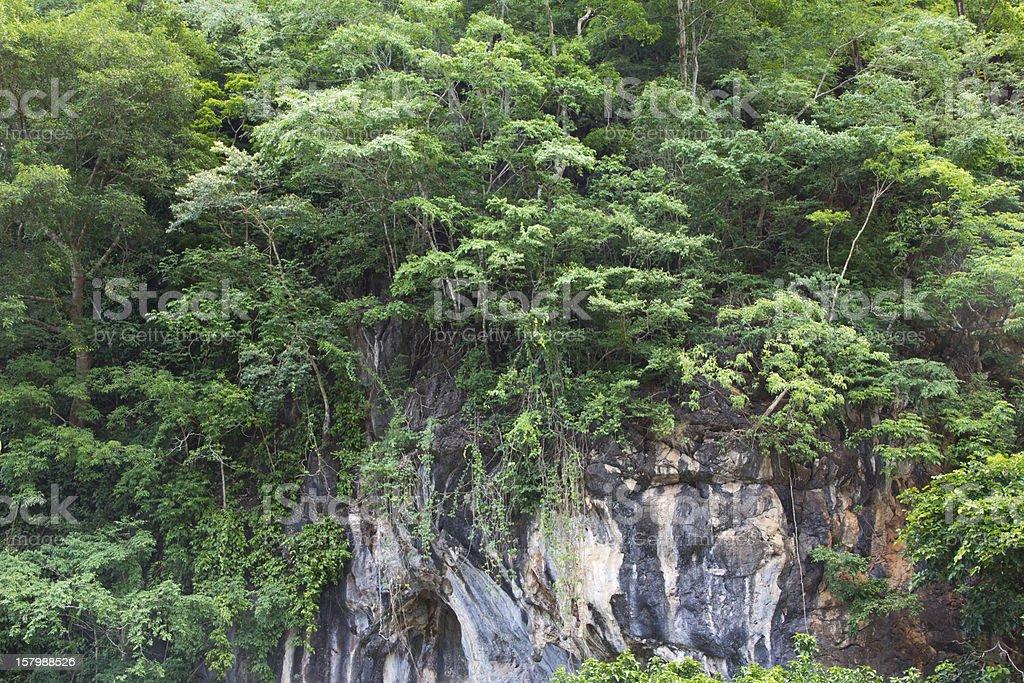 Tree on limestone mountain. royalty-free stock photo
