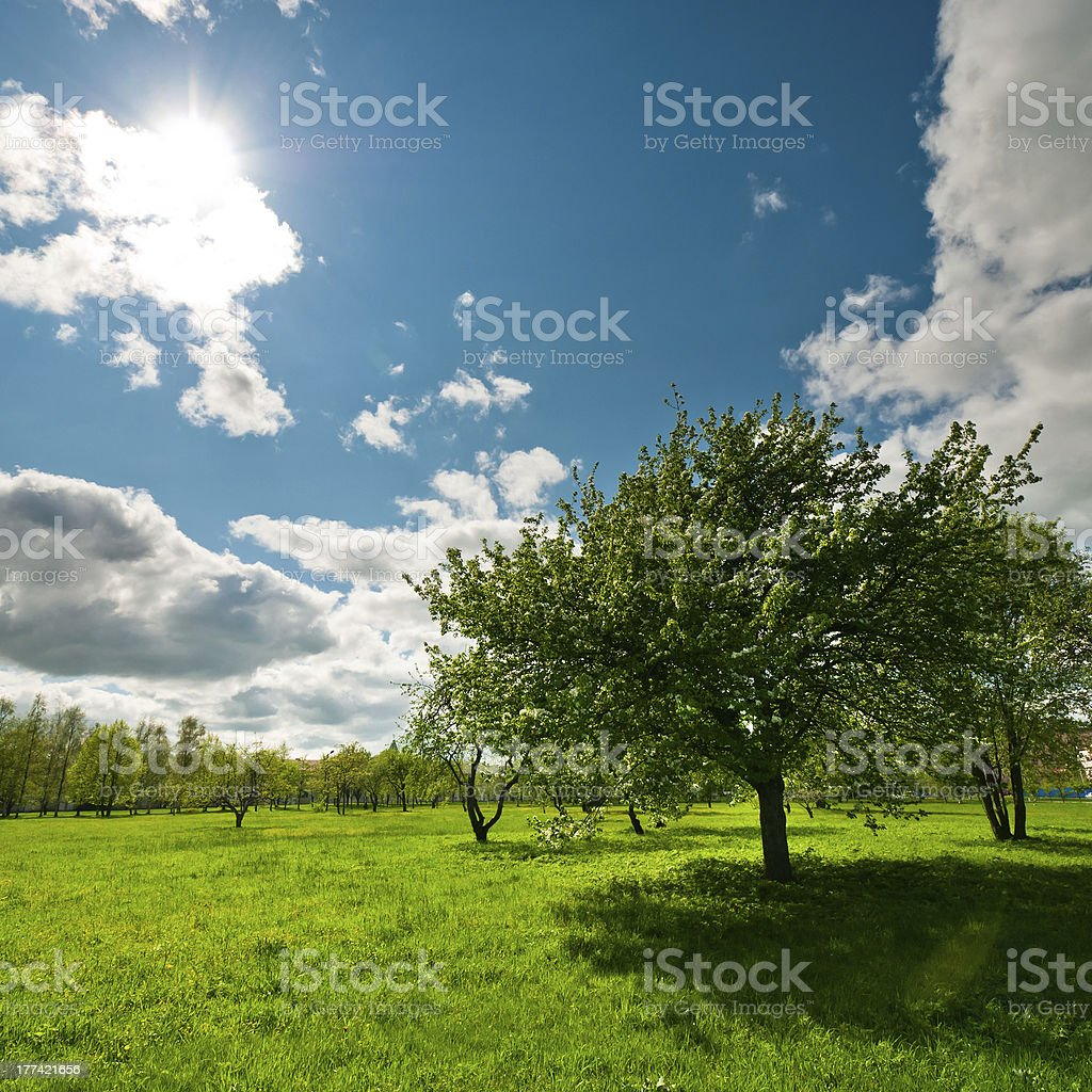 Tree on meadow with bright sun stock photo