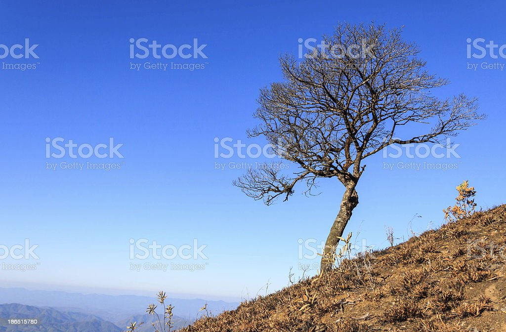tree on mountain royalty-free stock photo