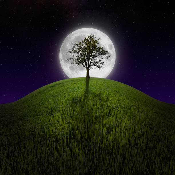 Tree on night hill lit by moon stock photo