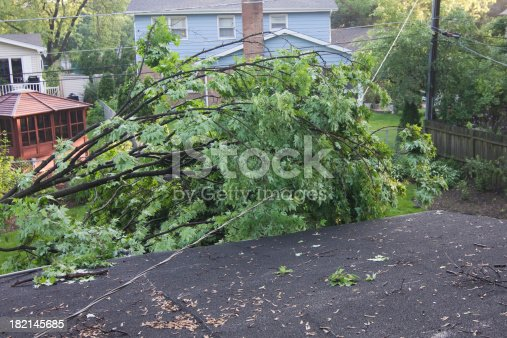 Uprooted maple tree laying on main power line to house - very dangerous!