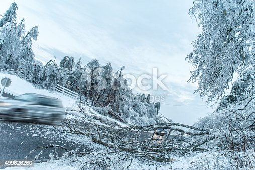 482803237 istock photo tree on road and car passing 499626260