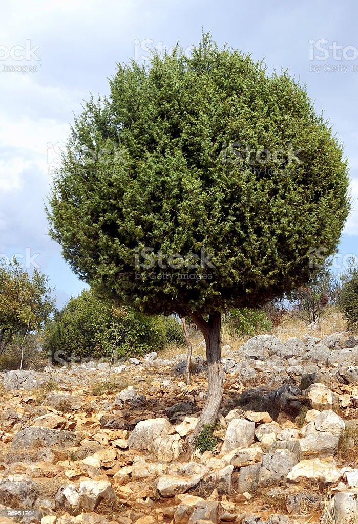 Tree on rocks royalty-free stock photo