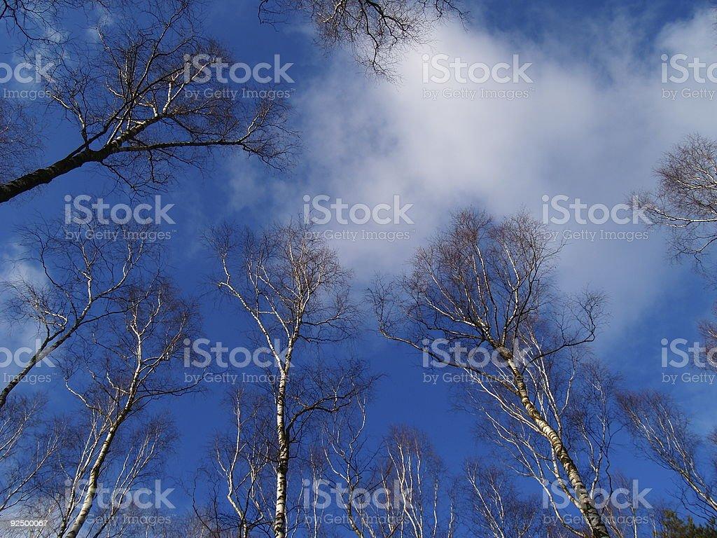Tree on Sky royalty-free stock photo