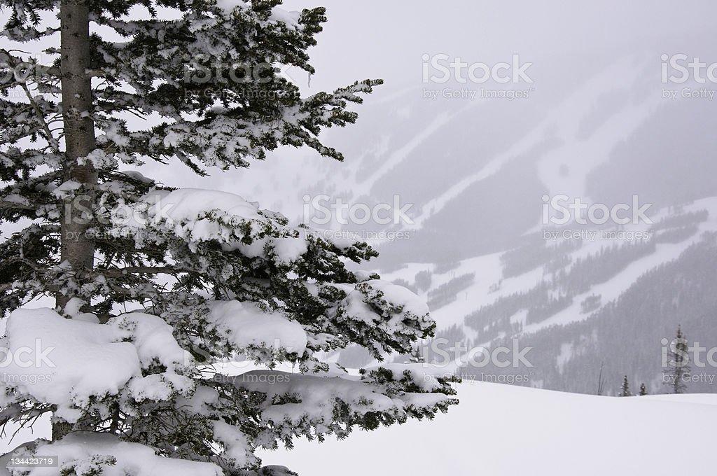 Tree on SNowy Mountain Ridge Beaver Creek Colorado stock photo