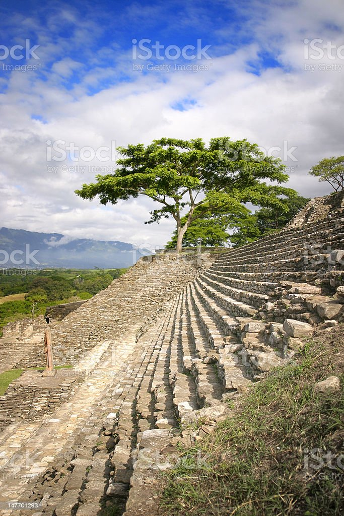 Tree on Temple royalty-free stock photo
